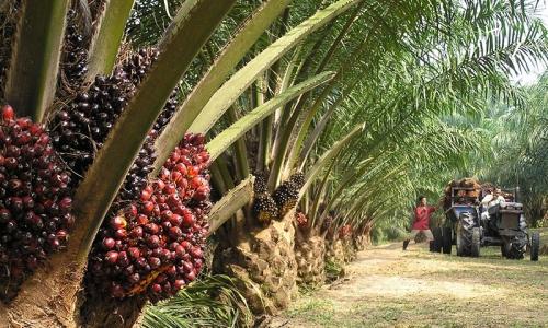 НДС на пальмовое масло